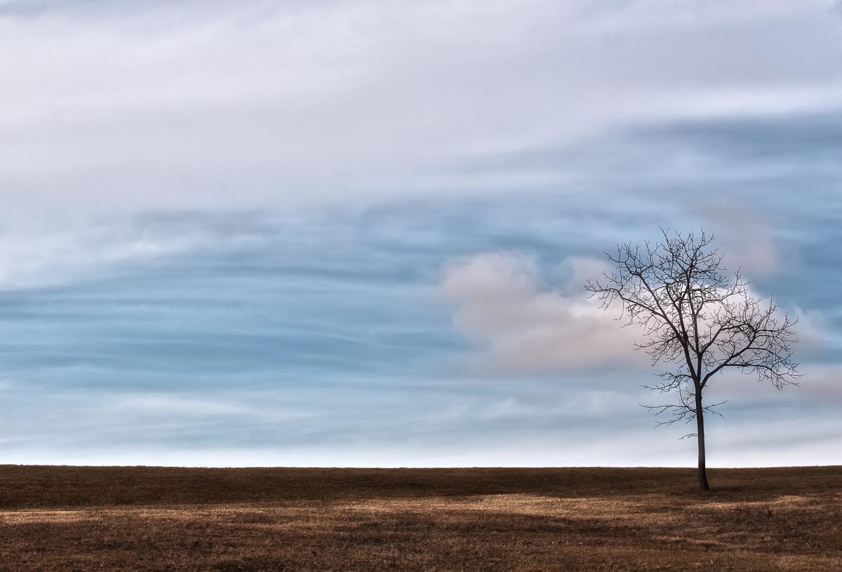 Alone - Tree - Photo