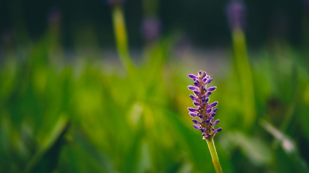 Purple is a color. Purple on a green stem is a flower.